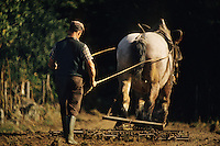 Europe/France/Limousin/23/Creuse/Jarnages: Travaux des champs, hersage avec Jument à Domeyrot<br /> PHOTO D'ARCHIVES // ARCHIVAL IMAGES<br /> FRANCE 1980