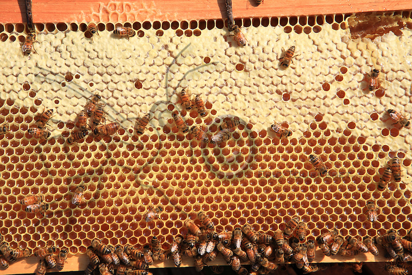 Some bees on a honey frame.