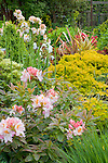 Vashon-Maury Island, WA  <br /> Spring garden bed featuring deciduous azalea (Rhododendron occidentale) and barberry (Berberis sp)