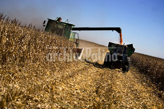 Corn harvest in a farm near Carlos Casares