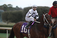 HOT SPRINGS, AR - FEBRUARY 19: Combatant #10, with jockey Ricardo Santana Jr. aboard before the running of the Southwest Stakes at Oaklawn Park on February 19, 2018 in Hot Springs, Arkansas. (Photo by Justin Manning/Eclipse Sportswire/Getty Images)