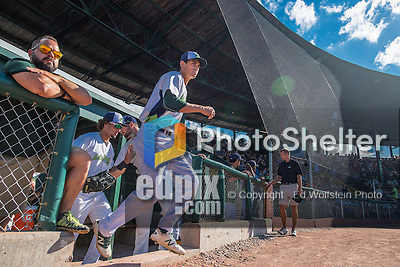 31 July 2016: Vermont Lake Monsters infielder Luke Persico emerges from the dugout to take the field against the Connecticut Tigers at Centennial Field in Burlington, Vermont. The Lake Monsters edged out the Tigers 4-3 in NY Penn League action.  Mandatory Credit: Ed Wolfstein Photo *** RAW (NEF) Image File Available ***