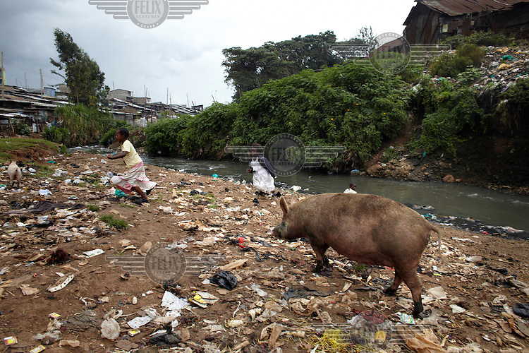 Two young children run past a domestic pig that is scavenging through mounds of discarded waste in the Mathare slum. This district is home to half a million people the majority of whom live in extreme poverty.