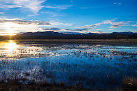Sun sets over an almost-empty pond at Bosque del Apache National Wildlife Refuge.  The ducks remain, but thousands of Snow Geese and Sandhill Cranes made their way shortly before sunset.