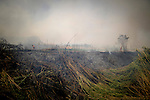 General view shows burnt forests in Montserrat, on July 02, 2012, near Valencia.(c)  Pedro ARMESTRE