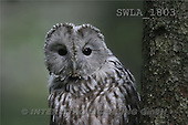 Carl, ANIMALS, wildlife, photos(SWLA1803,#A#)