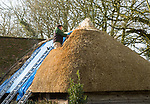 Thatcher working on roof of house, Alton Priors, Wiltshire, England, UK