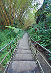 USA, HI, near Hilo, Akaka Falls SP, Path Through Bamboo Forest