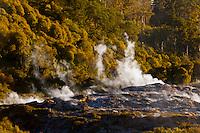 Steam rising, Te Puia (New Zealand Maori Arts & Crafts Institute), Whakarewarewa Geothermal Valley, Rotorua, New Zealand