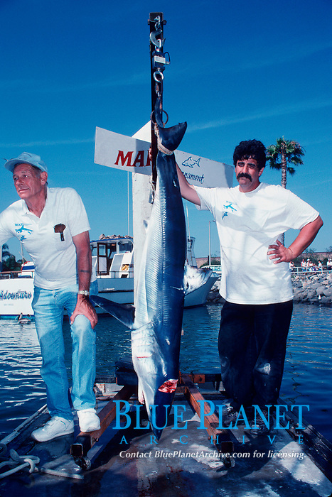 Shark tournament, Shortfin mako, Isurus oxyrinchus, California, USA, East Pacific Ocean