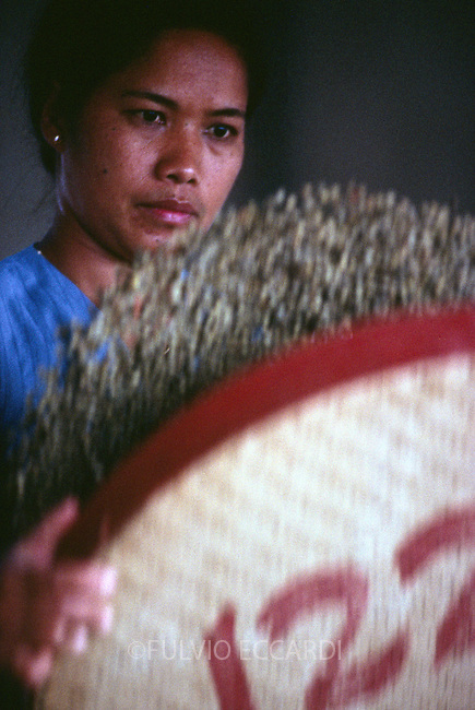 Indonesia, Java, Mangli, coffee, coffea, organic, beans, dry, sorting, process, basket, floor, worker, woman, manual, by hand