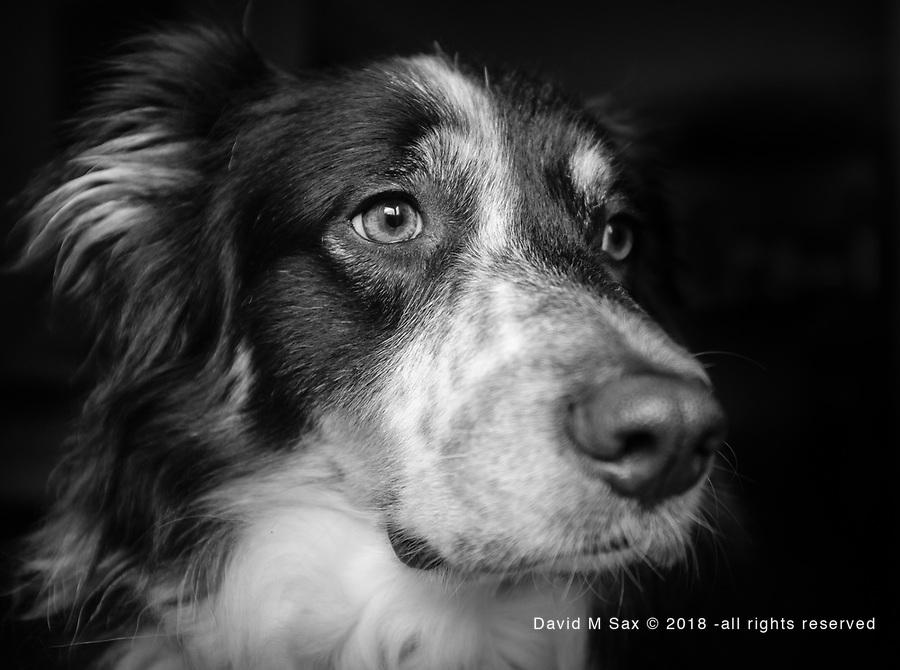 4.18.17 - Portrait 2...