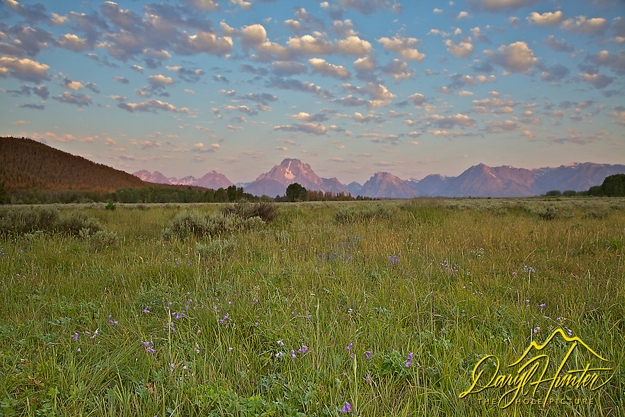 Wildflowers, puffy clouds, Grand Tetons