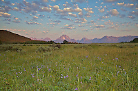 Wildflowers, puffy clouds, Grand Tetons<br />