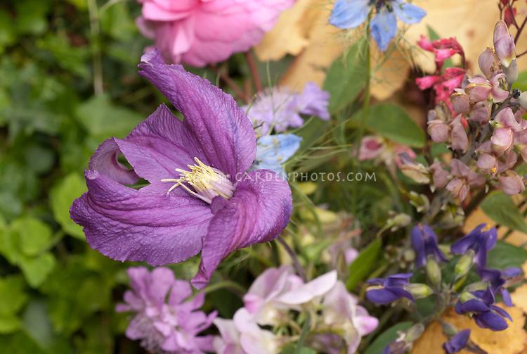Posie, cut flower Clematis, Rose, Scabiosa, Nigella, Lathyrus odoratus, Baptisia, Heuchera flowers