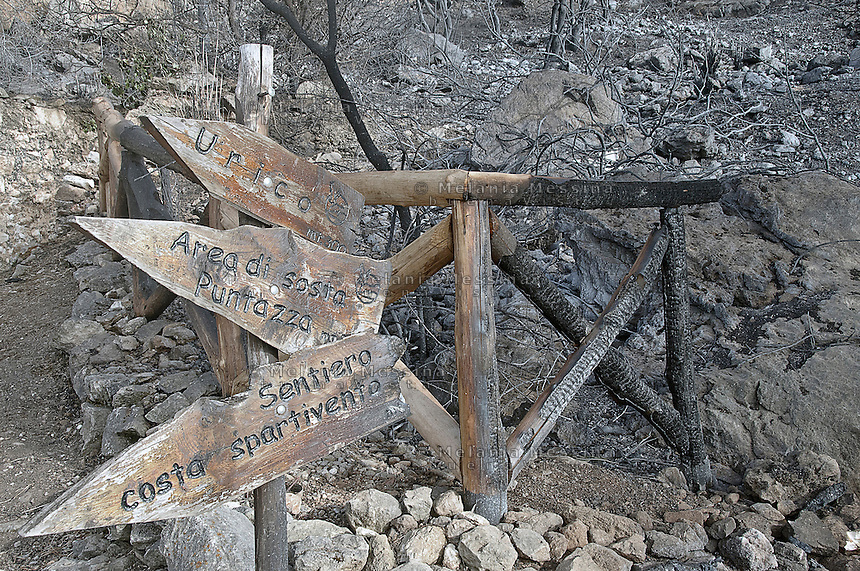 La riserva naturale di Capo Gallo devastata dall'incendio quasi certamente doloso del 16 giugno.<br />