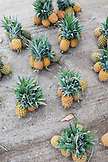 "FRENCH POLYNESIA. Raiatea Island. Pineapples from ""Mamie Fruits"" farm."