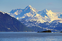 Brandt geese migrate through northern prince William sound, Mt Gilbert of the Chugach mountains, Alaska