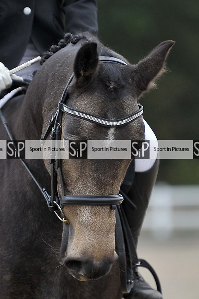 Class 1. Unaffiliated dressage. Brook Farm Training Centre. Essex. UK. 06/10/2018. ~ MANDATORY Credit Garry Bowden/Sportinpictures - NO UNAUTHORISED USE - 07837 394578