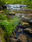 Lane County, Oregon<br /> A waterfall on Sweet Creek in Siuslaw National Forest