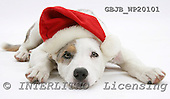 Kim, CHRISTMAS ANIMALS, photos, GBJBWP20101,#XA# stickers