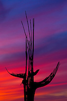 A red and blue Sonoran Desert sunset behind the ribs of a Saguaro Cactus; Sonoran Desert, Arizona