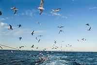 Riviera adriatica, Bellaria, pesca nel mare adriatico, con pescherecci e reti