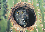 Elf Owlet<br /> 5x7&quot; notecard with white envelope.<br /> Printed on recycled paper with soy-based ink. Watermark does not appear on product.