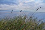 Whidbey Island, bluffs, beach cliffs, erosion, Puget Sound, Strait of Juan de Fuca, Washington State, Salish Sea, Pacific Northwest, Global Warming, sea level rise,