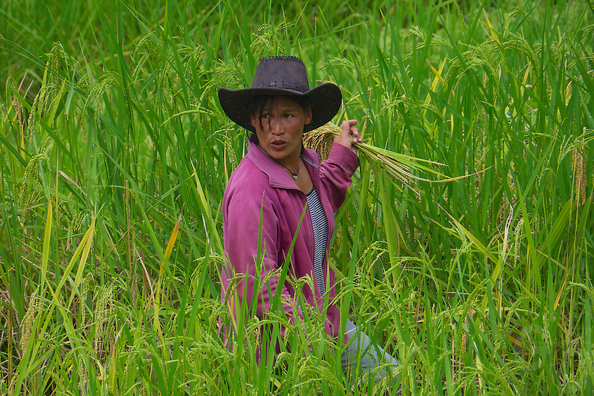 Checking on the rice in the Banaue Mountain Province Rice Terraces Philippines