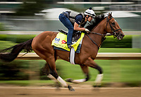 LOUISVILLE, KY - APRIL 30: Practical Joke gallops at Churchill Downs on April 30, 2017 in Louisville, Kentucky. (Photo by Alex Evers/Eclipse Sportswire/Getty Images)