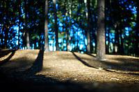 Uruguay - Parque Roosevelt