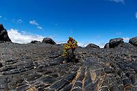 Large lava mounds along the access road to Mauna Loa volcano 13679' Mauna Kea in the distance the Big Island of Hawaii