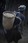 Woman carrying a basket of peanuts collected in the field. Cameroon..