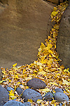 Leaves from a nearby Arizona Sycamore (Plantus wrightii) create a cascade