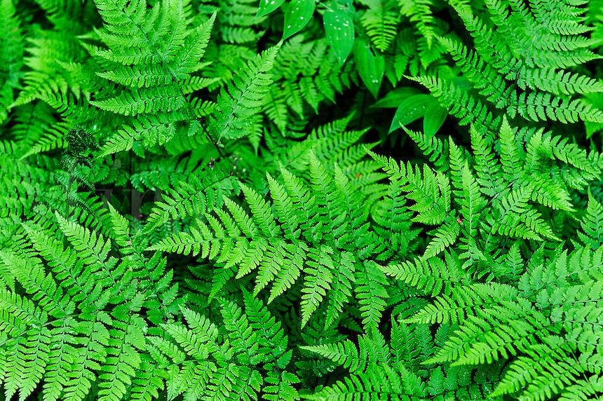 Ferns, Alaska