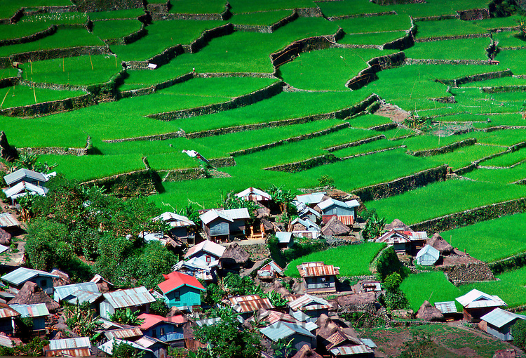 Rice Terraces, Banaue, Philippines RESERVED USE - NOT FOR DOWNLOAD -  FOR USE CONTACT TIM GRAHAM