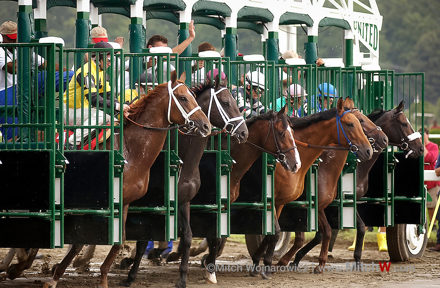 Saratoga Springs, NY  Horses break from the gate starting a thoroughbred horse race at the New York Racing Association horse track here..©Mitch Wojnarowicz