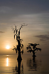 Sunrise on Lake Maurepas, Louisiana. The environmental concern of Louisiana's receding wetland's are on full display where the swamp meets the Lake on Lake Maurepas, Louisiana. These cypress trees were once part of the deep forest that now sits in the distance