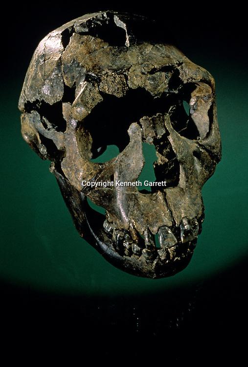 Turkana Boy, Kenya, West Turkana, Lake Turkana, KNMER-WT15000, H. erectus,Nariokotome boy, Kenya