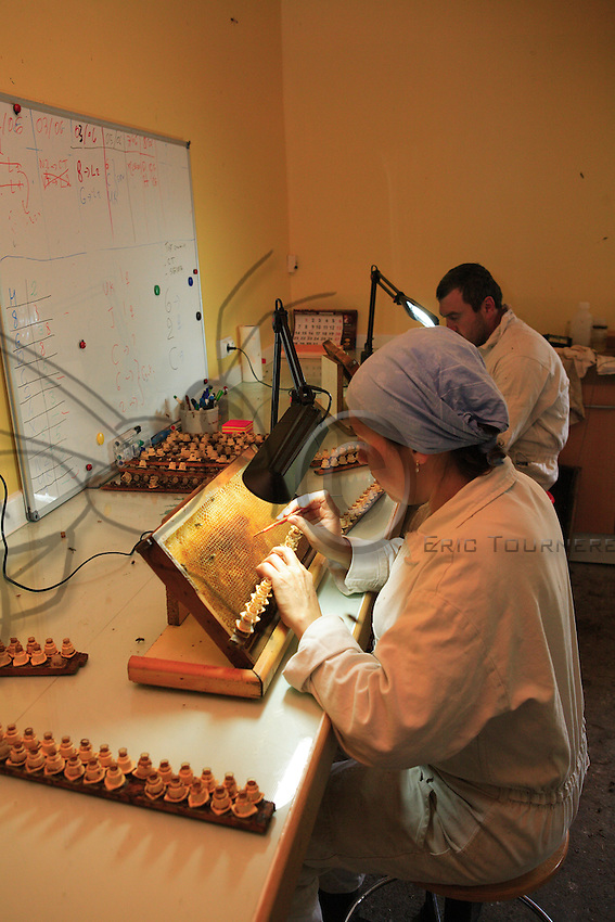 In a queen-breeding laboratory, the beekeeper takes eggs from the brood frames.