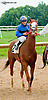 Ponzi Scheme winning The Stymie Stakes at Delaware Park on 7/11/13