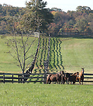 Bright View Farm in Chesterfield, New Jersey.  Photo By Bill Denver/EQUI-PHOTO.