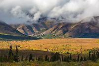 Autumn tundra in Denali National Park, Alaska.