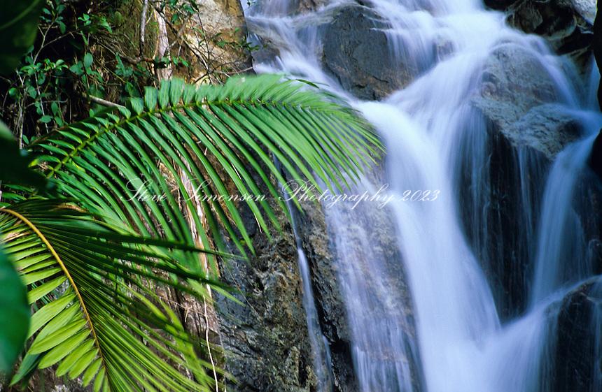 El Yunque Rainforest<br /> Puerto Rico