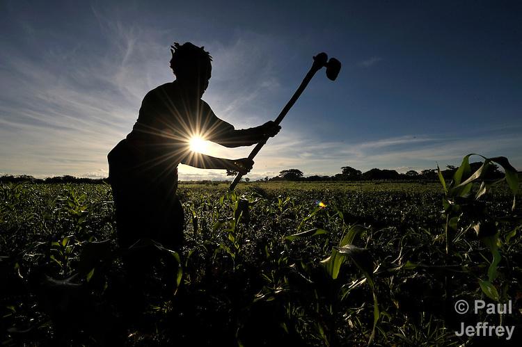 A woman farmer hoes her field near Chibamu, in northern Malawi.