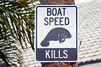 Florida manatee warning sign for boaters, Trichechus manatus latirostris, Crystal River, Florida, USA