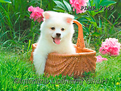 Marek, ANIMALS, REALISTISCHE TIERE, ANIMALES REALISTICOS, dogs, photos+++++,PLMP2949,#a#, EVERYDAY