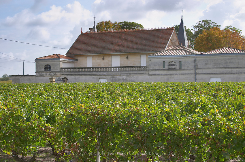 Vineyard. Winery building. Chateau La Grace Dieu. Saint Emilion, Bordeaux, France