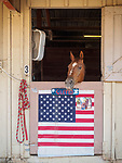 Horses in stall with flags, Opening day of the 80th Amador County Fair, Plymouth, Calif.<br /> .<br /> .<br /> .<br /> #AmadorCountyFair, #1SmallCounty Fair, #PlymouthCalifornia, #TourAmador, #VisitAmador